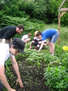 The gardening group works on weeding in one of Worcester's community gardens!