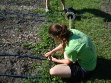 Allison setting-up the drip irrigation system!